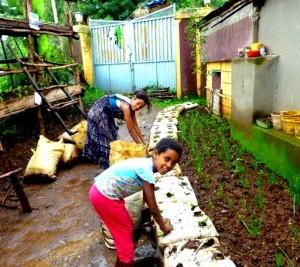 Gondar garden 1rev